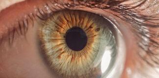 Jak zbudowane jest oko ludzkie